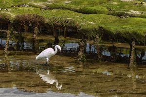 Aigrette by hubert61