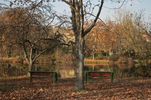 Two benches and Tree by dardaniM