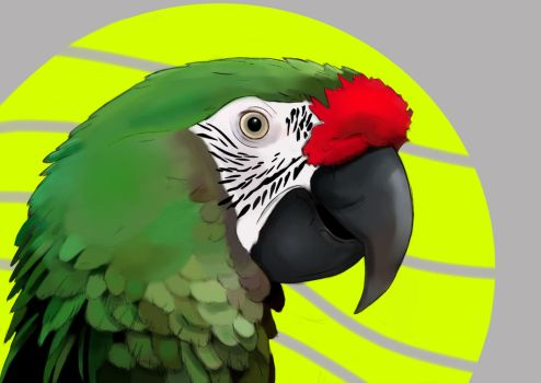 Green Macaw Drawing. by MasterPred
