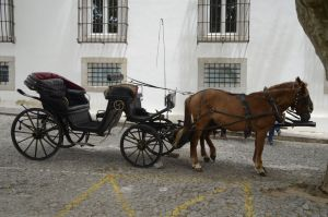 Horse Car by Naerys-Stock