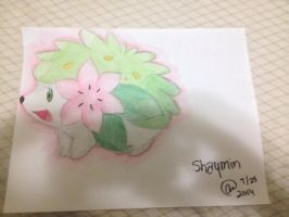 Pokemon: Shaymin~ by animelover287
