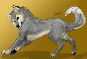 Wolf by Moolallingtons