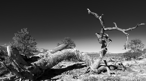 The Twisted Tree by coulombic