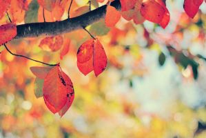 Fall Leaves by Sunira