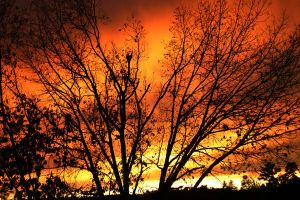 Tree Ablaze by Geak-of-Nature