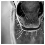 Icy Muzzle by LovLus