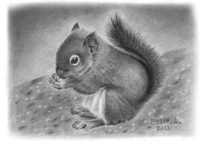 Squirrel by Torsk1
