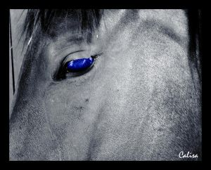 Pegasus' eyes