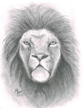 lion of the night by donaldhoward58