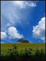 Trees on Hill by neverender101