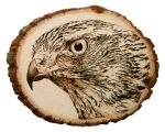 Goshawk- Pyrography by lost-nomad07