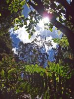 Canopy shot 1 by Kiku-Goldenflower