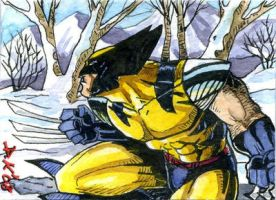 Wolverine Winter Sketch Card by DKuang