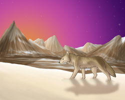 Wolf at Sunset Re-Do by Morgan-Michele