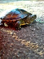 Turtle by P5YD3X
