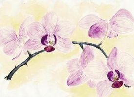 Orchid by sivi87 by TraditionalArt