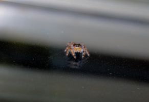 BOO -black and orange spider by Sakonige