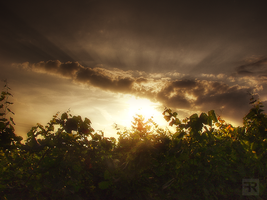 Vineyard Sunsets by FilipR8