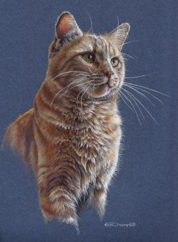 Cat Portrait by EsthervanHulsen