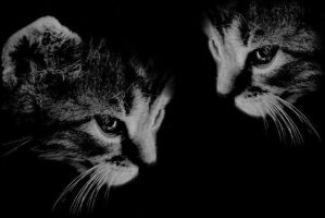 cats II by ayanne