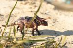 Anchiceratops by hontor