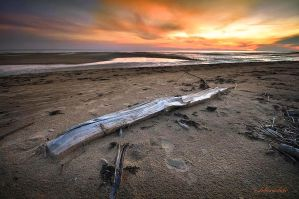 driftwood by hotonpictures