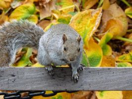 A squirrel in New York by jm2003uk