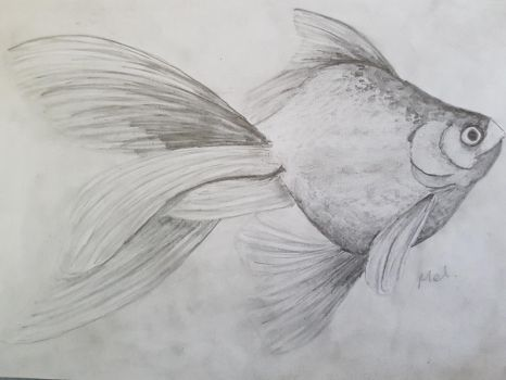 another fish Pencil by rainbow-falls