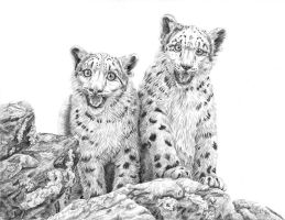 Small snow leopards by AldemButcher