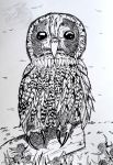 [Indian Ink art] Owl by BlackDragon07