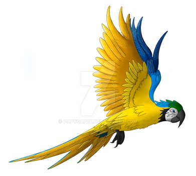 A free flying blue-and-yellow macaw by Papygai4ik