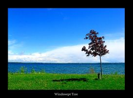 Windswept Tree by STDesigns