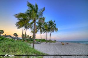 Hollywood-Florida-Coconut-Trees-Sunset by CaptainKimo