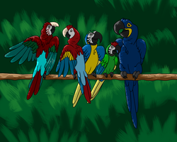 Macaws by CavySpirit