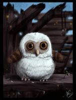 Barn Owl by froggywoggy11