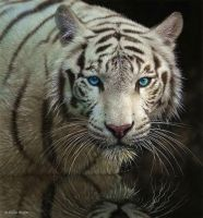 white tiger by Seanbean80