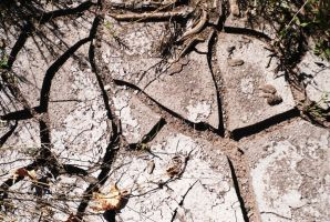 Mud Cracks by videlreyes