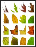 Changing Leaves Closeup by QubixDesign