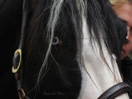 Hannibal-Gypsy Vanner by Romydb