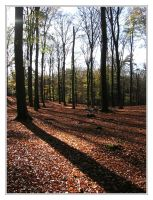 Beech Wood by IsaFortyThirty1