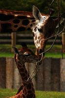 A Mothers Love. by quaddie