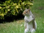 squirrel by poloos