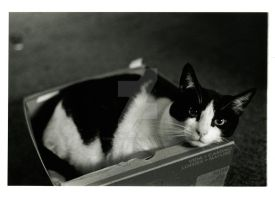 My Prin in a Box 1 by Champineography