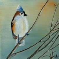 Tufted titmouse by WendyMitchell