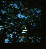 diana f+..tunnel by AnalogPhotographers