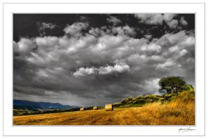 Between grey and gold... by Michel-Lag-Chavarria