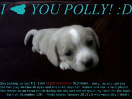This is my new puppy! :D by albinokipanga