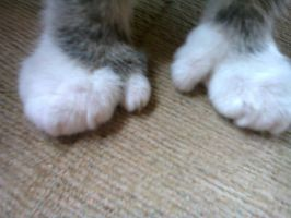 Polydactyl MY CAT HAS THUMBS:D by shadowburn88