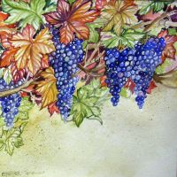Grapes Autumn Harvest by HouseofChabrier