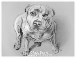 Staffordshire Terrier by hatefueled